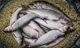 خریدار ماهی سفید تهران