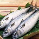 لیست قیمت ماهی سفید ایرانی