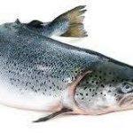 خرید عمده ماهی سفید دودی