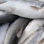 بازار فروش ماهی سفید تهران