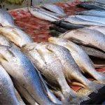 خرید آنلاین ماهی سفید ارزان