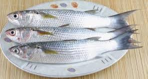 عرضه مستقیم ماهی سفید دریا
