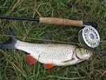 ماهی سفید رودخانه ای